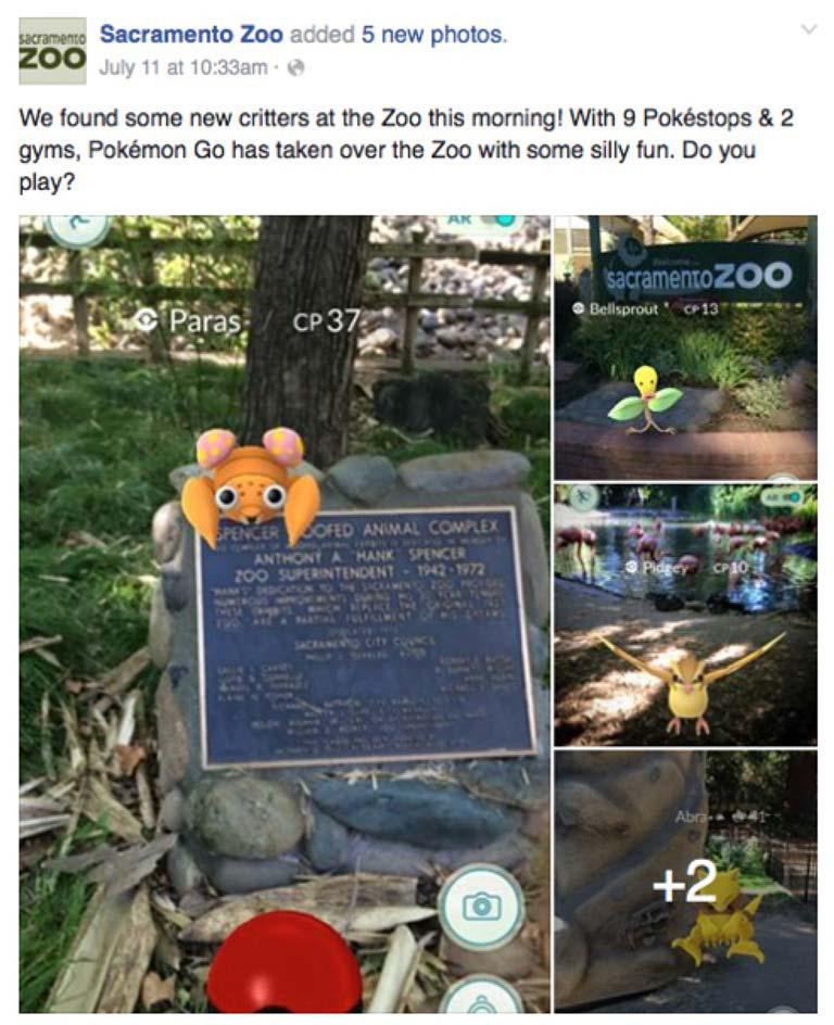 Sacramento Zoo Pokemon sighting